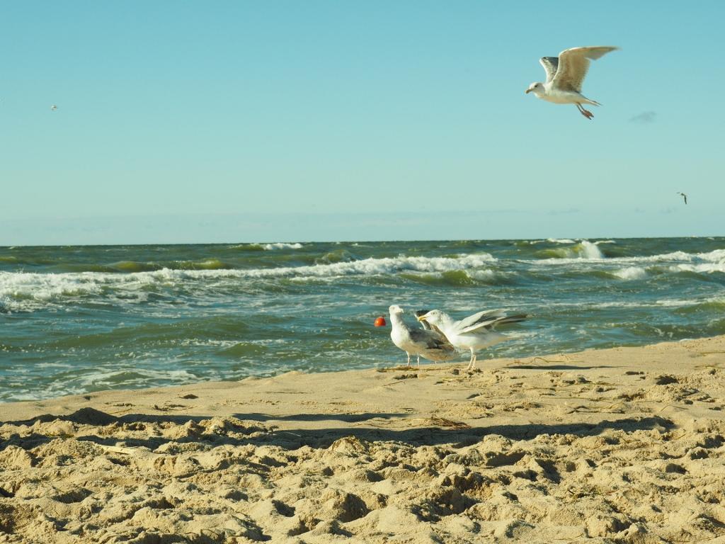 Piszczysta plaża - Bobolin